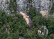 Voyage du GOBE à Rémuzat (Drôme) du 16 au 18 septembre 2017