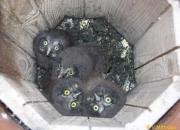 4 jeunes au nid